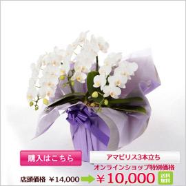 a_item765_b_banner.jpg