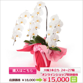 d2_item765_b_banner.jpg
