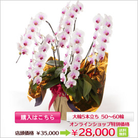 e_item765_b_banner.jpg