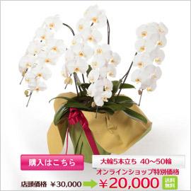 f_item765_b_banner.jpg